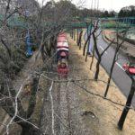 【子連れ】碧南明石公園の遊具はコスパ◎で超おすすめ!【おでかけ】